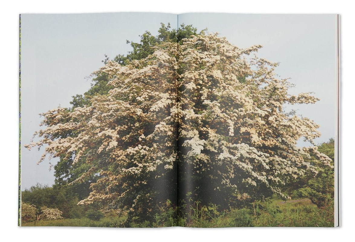 Garry Fabian Miller - Seeing Believing artist book tree