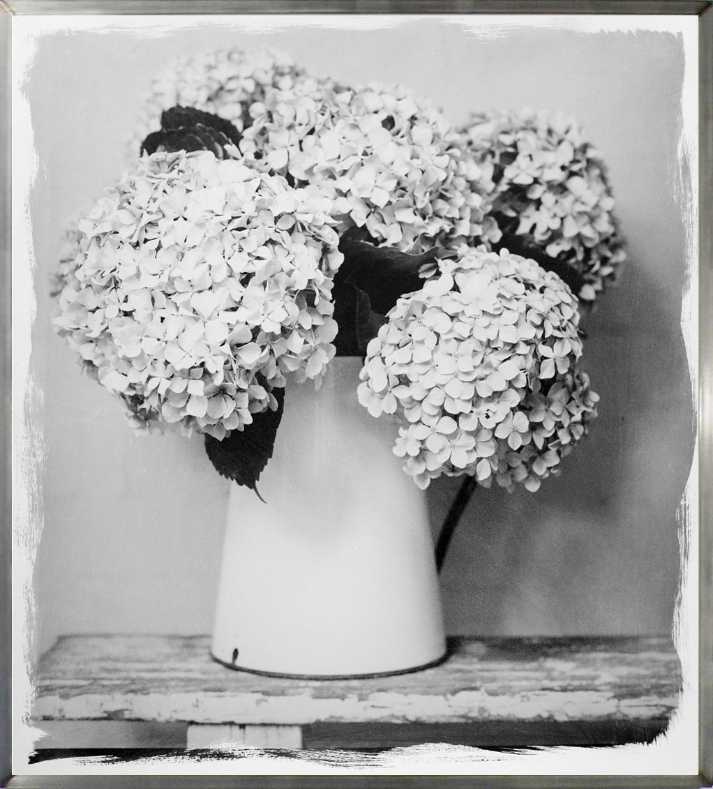 Hydrangea In Vase, 2017 by Stephen Inggs