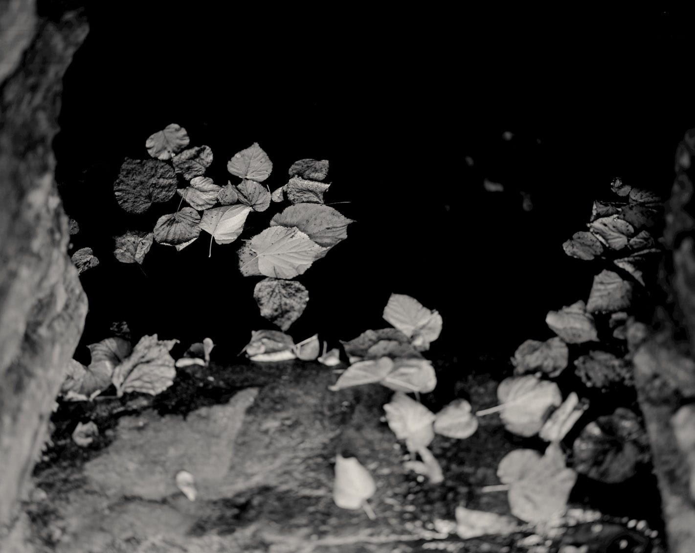 Untitled 42-Ex Voto-Alys Tomlinson-black and white photography - leaves in water