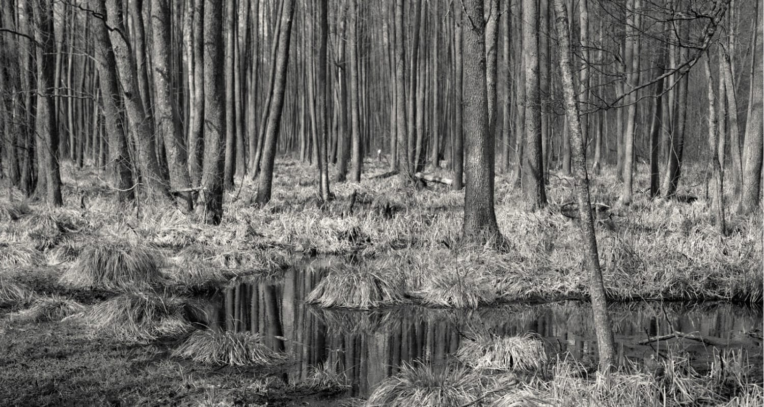 HackelBury Fine Art-Alys-Tomlinson-Ex-Voto-detail image-black and white photograph of forest landscape