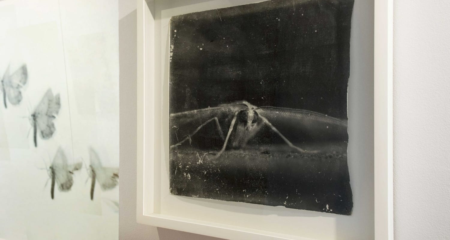 HackelBury Fine Art-installation image-Doug and Mike Starn-Attracted to Light-photographic artworks of moths