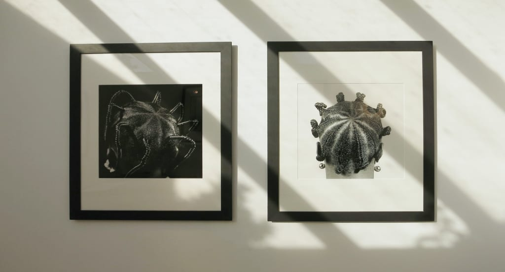JD Ojeikere - installation shot at HackelBury Fine Art London - two photographs - braided hair patterns
