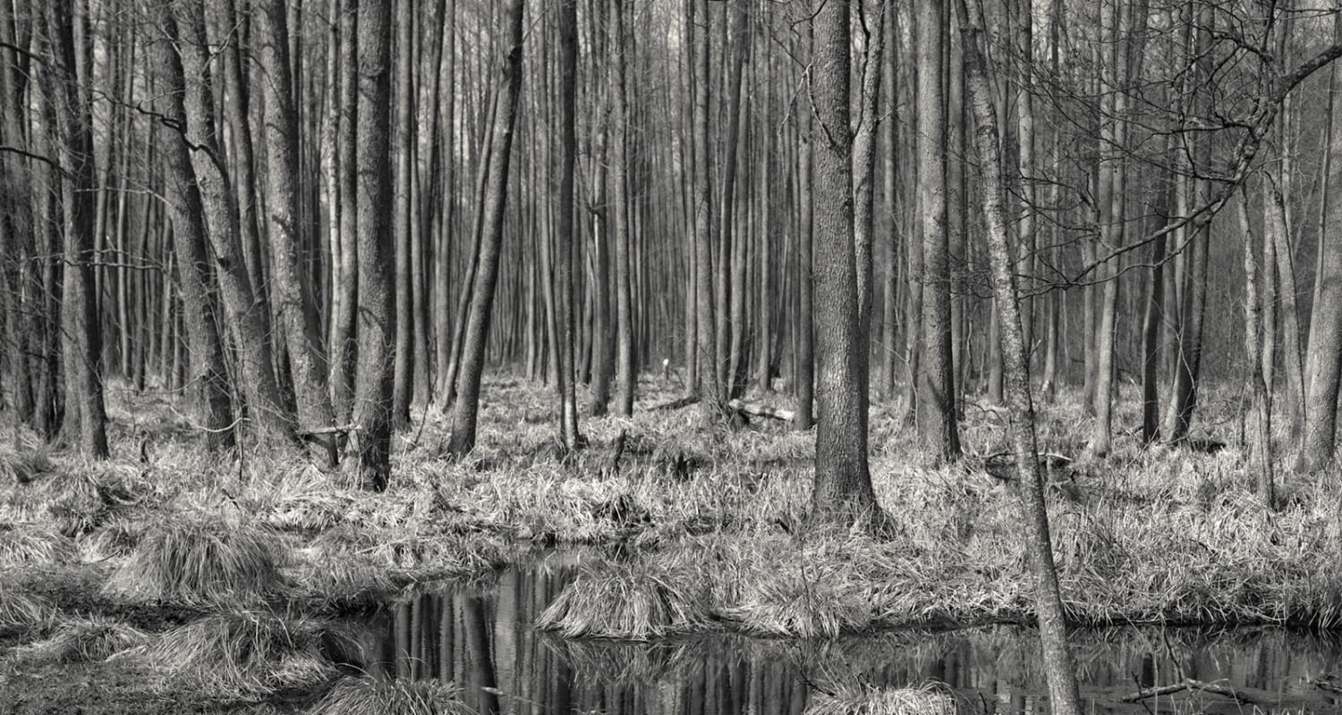 Alys Tomlinson untitled landscape-slideshow detail image-black and white photograph-HackelBury Fine Art