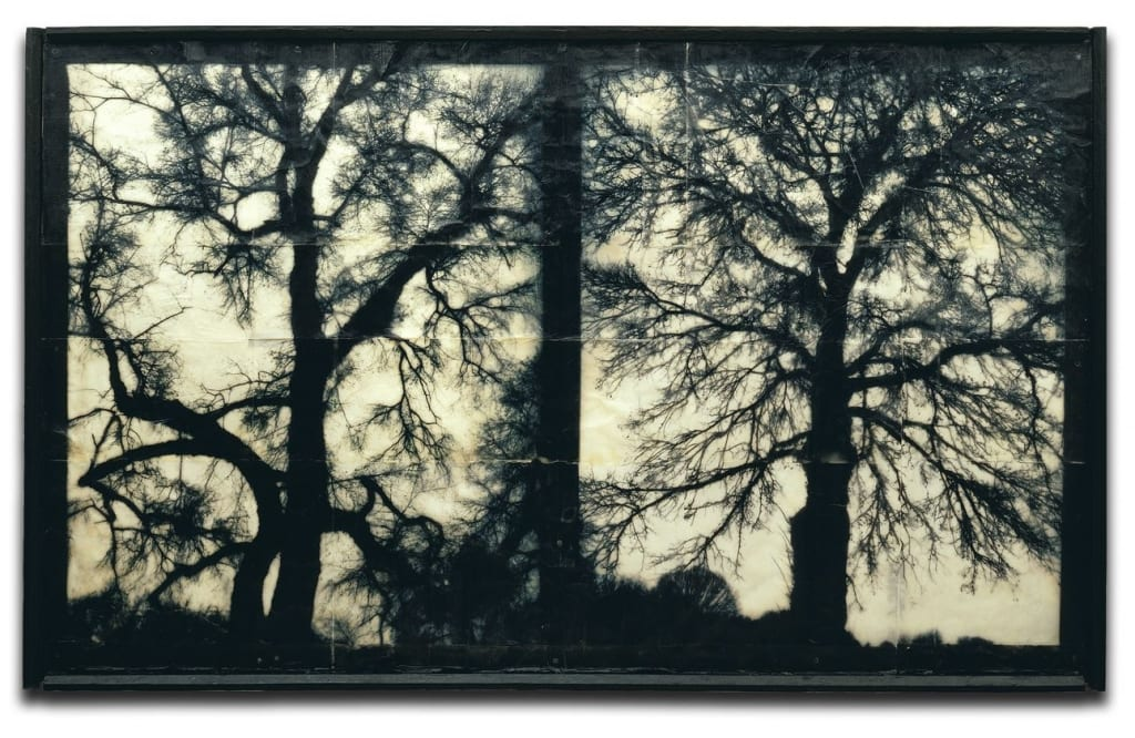 Doug Mike Starn-Blot Out the Sun 3-fine art photography-HackelBury Fine Art London-tree photographs