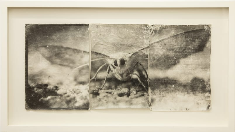 Doug and Mike Starn artwork - black and white photograph of a moth